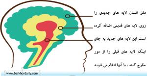 آشنایی با مغز- لایه های مغز