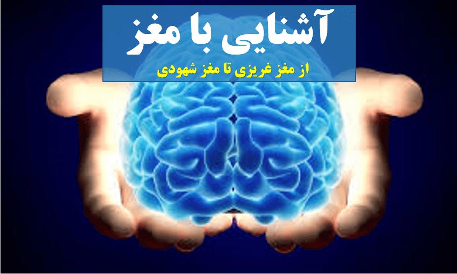 آشنایی با مغز